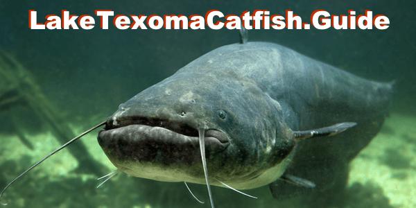 Lake texoma guided fishing trips fishing lake texoma for Texoma fishing license